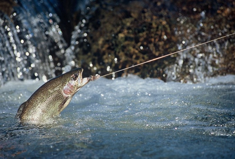 Fly Fishing 2